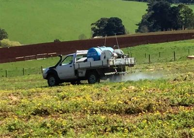 Spraying Weeds in Paddock